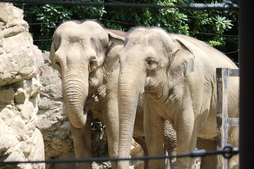 上野動物園 アジアゾウ