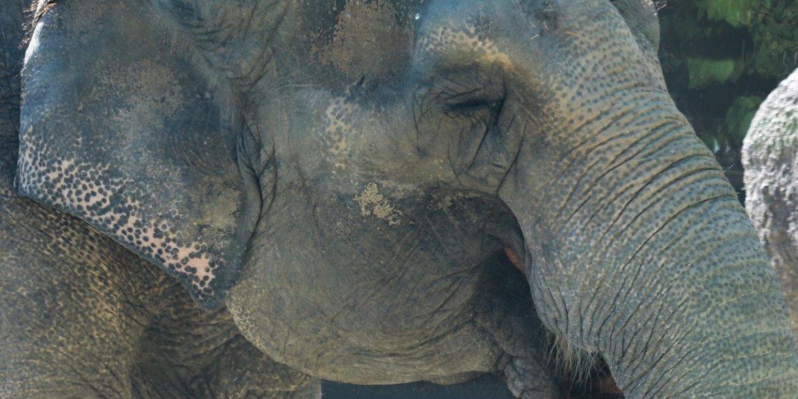 福岡市動物園 ゾウ はな子