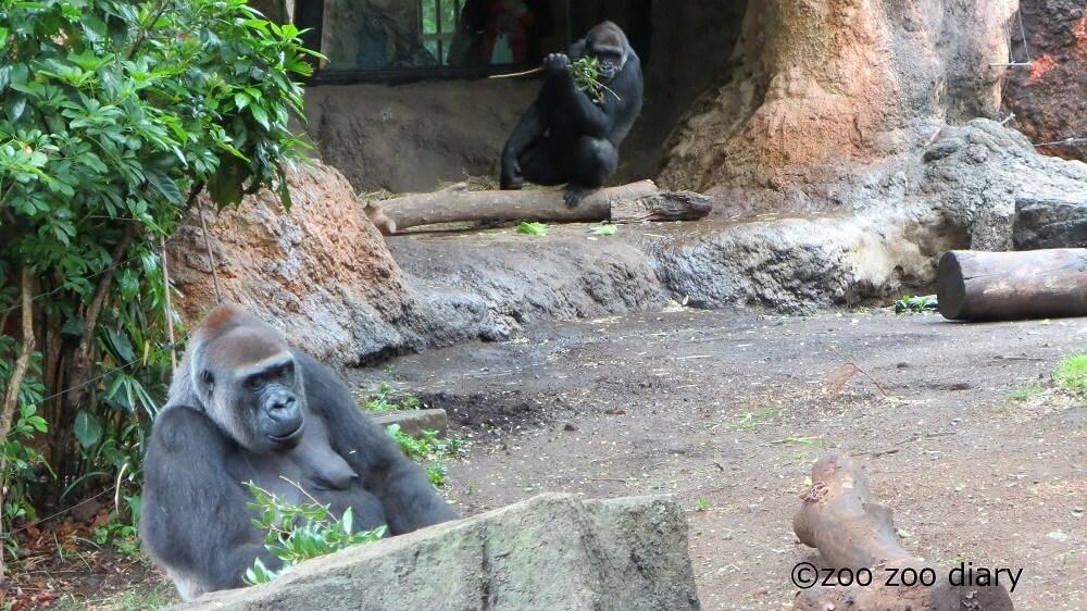 上野動物園 モモコとコモモ