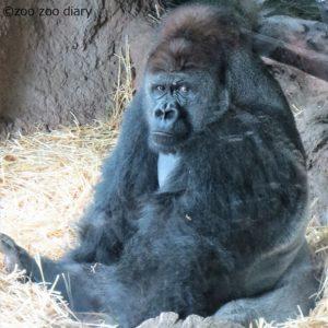 上野動物園 ハオコ