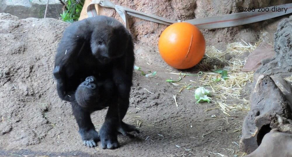 上野動物園 モモカとリキ
