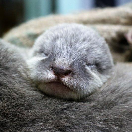 福岡市動物園 カワウソの赤ちゃん