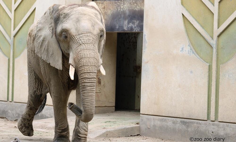 熊本市動植物園 ゾウ