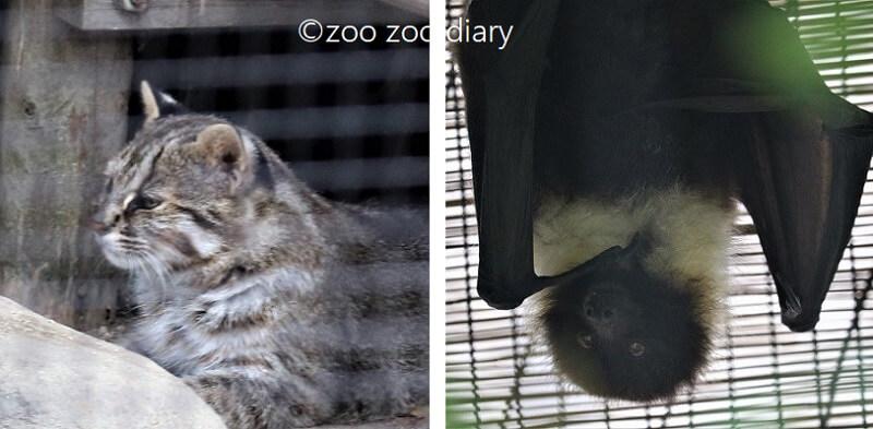 ツシマヤマネコ エラブオオコウモリ