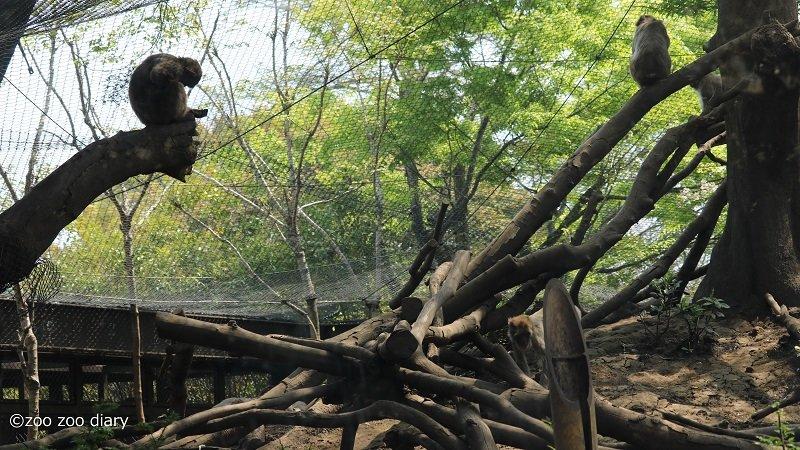 熊本市動植物園 サル山