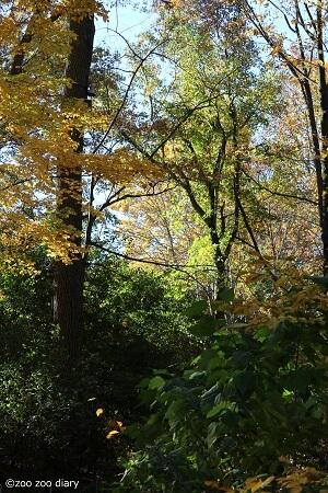 ブロンクス動物園 森