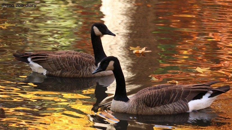 ブロンクス動物園 池 鳥