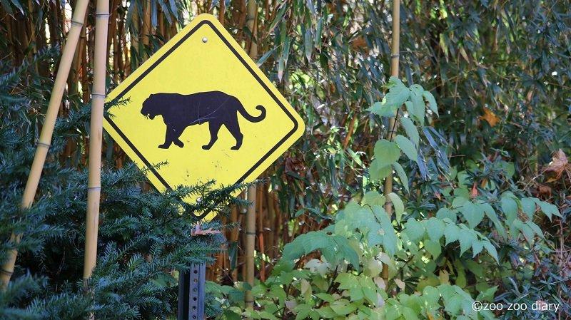 ブロンクス動物園 トラ