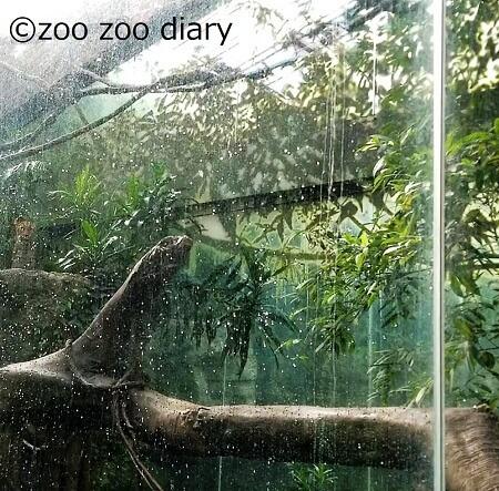 ブロンクス動物園 ヒョウ