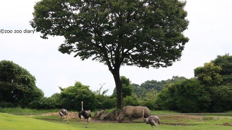 平川動物公園 アフリカの草原