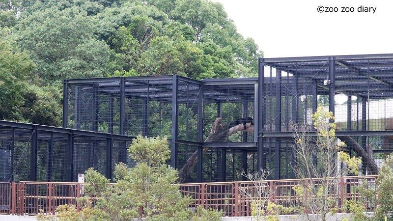 平川動物公園 クロジャガー