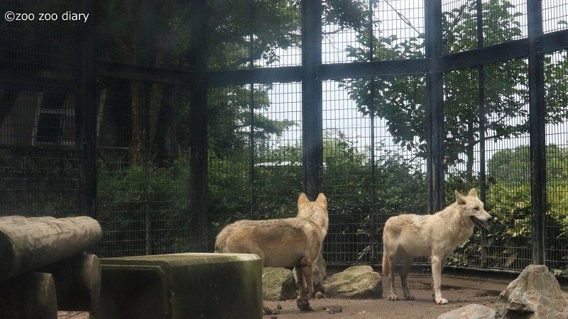 平川動物公園 シンリンオオカミの親子