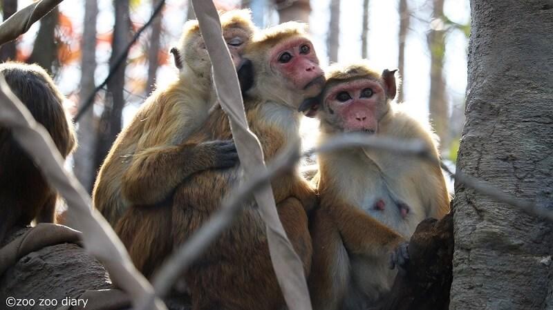 ときわ動物園 トクモンキー