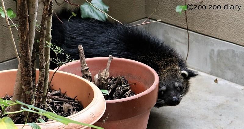 福岡市動物園 ビントロング
