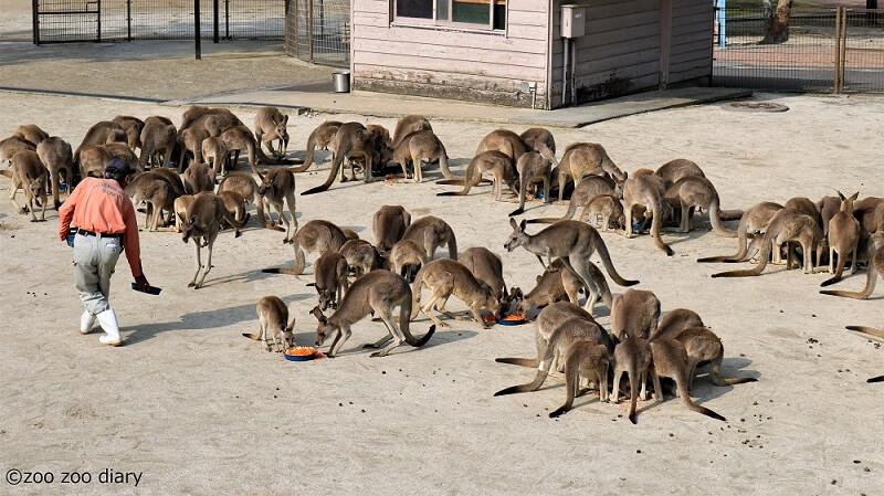 ひびき動物ワールド ひびき動物ワールド カンガルー