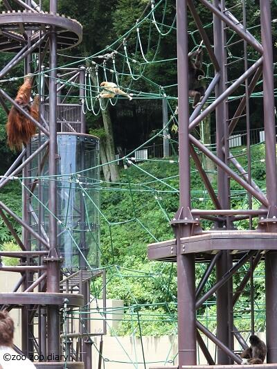 福岡市動物園 オランウータンとテナガザル
